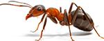 על ההבדל בין טרמיטים לנמלים