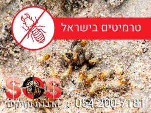 הדברת טרמיטים בישראל