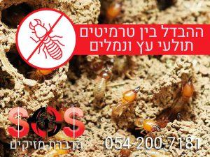 ההבדל בין טרמיטים לתולעי עץ ונמלים