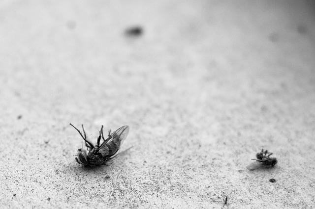 הדברת זבובים צרעות ודבורים
