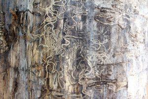 טרמיטים קטנים בעץ