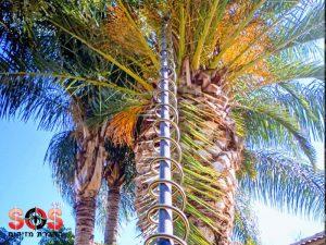 ריסוס עץ הדקל לטיפול בחדקונית
